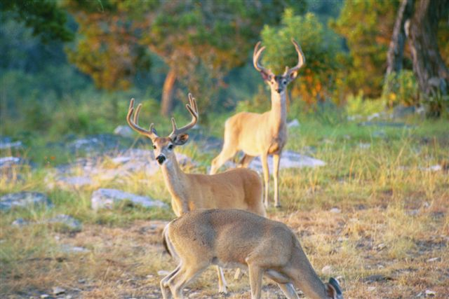Tour ranch scenery wildlife for Deer scenery